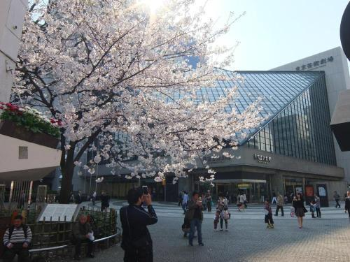 桜0413-13.jpg