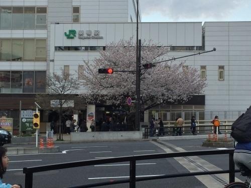 桜0413-14.jpg