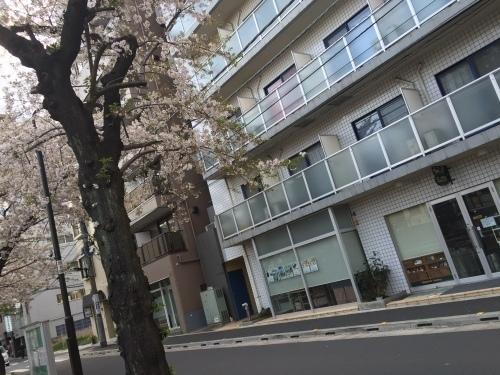 桜0413-16.jpg