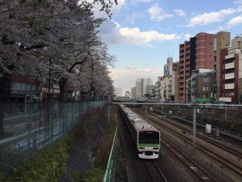 桜0413-18.jpg