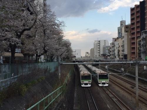 桜0413-19.jpg
