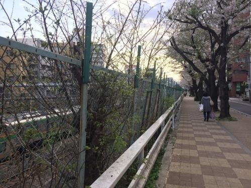 桜0413-20.jpg