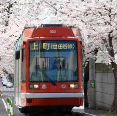 桜並木とらむ.加工jpg.jpg