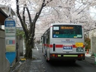 桜幻想14.JPG