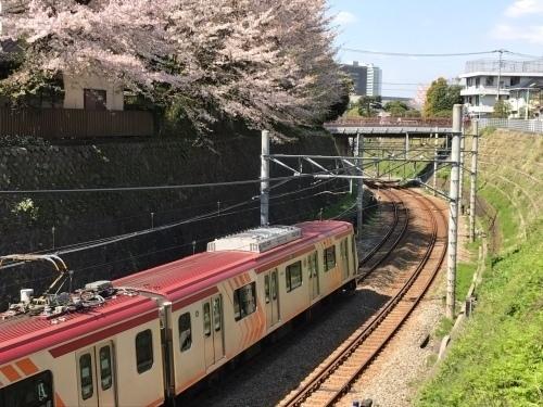 桜雄0413-06.jpg