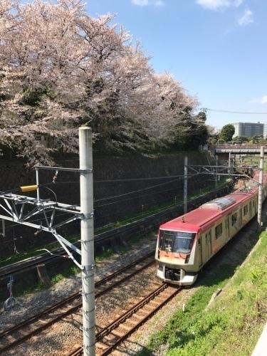 桜雄0413-08.jpg