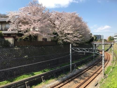 桜雄0413-09.jpg