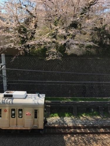 桜雄0413-10.jpg