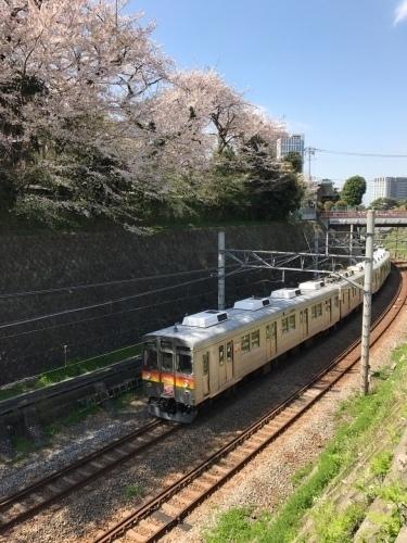 桜雄0413-11.jpg