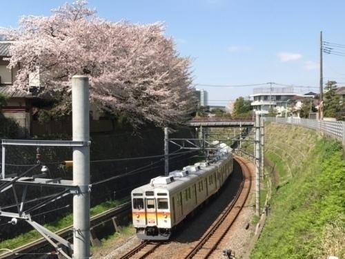 桜雄0413-12.jpg