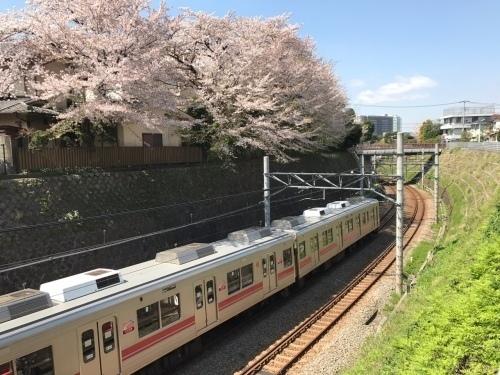 桜雄0413-16.jpg