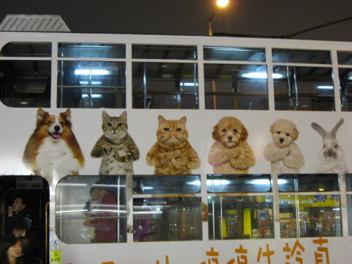 香港2010春節13ー2.jpg