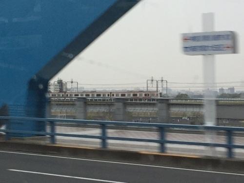小杉14.jpg