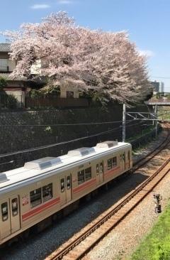 桜雄0413-01.jpg